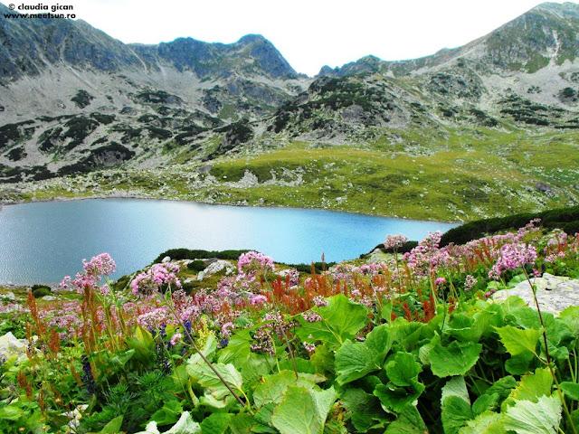 Lacul Bucura printre flori de brusturet roz, omag violet, stevie maronie si chiar o lumânărică galbenă