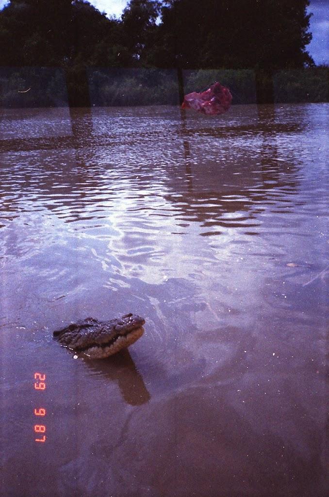 5910Adelaide River Croc Tour