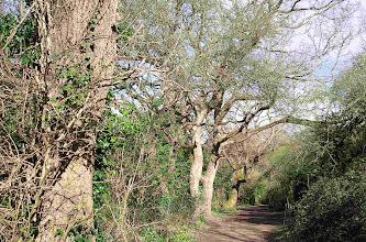 Photo: Cosmeston Country Park