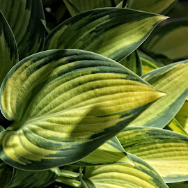 BRND leaf 40 18 by Michael Moore - Nature Up Close Leaves & Grasses