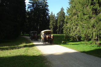 Photo: dans le pâturages boisés des Franches-Montanges