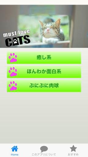 猫の画像:癒やし・肉球画像 待受画像に
