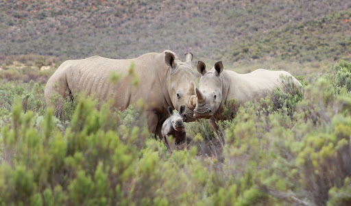 Gauteng man caught with 22 rhino horns 'was headed for Vietnam'
