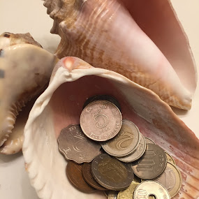 Shelling out some coins by Amber O'Hara - Artistic Objects Still Life ( bronze, sea shells, coins, money, pink,  )