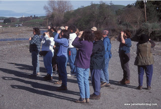 Photo: Winter birding along the streambed of Tres Pinos Creek, San Benito County.