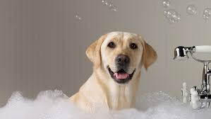 Diy dog wash happy hounds dog grooming are you fed up with the mess when bathing your dog at home why not use all our facilities to bath and dry your pooch we clear up solutioingenieria Gallery