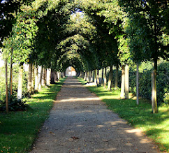 Photo: the way  #avenue  #trees  #straight  #allthingsgreen  #simple