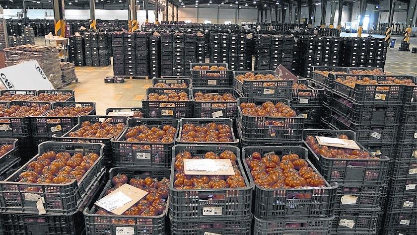 La presión de la competencia ha hecho bajar la producción y exportación de tomate en Almería