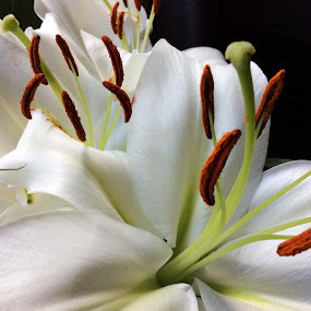 Lily's  by Janet Skoyles - Flowers Flower Arangements (  )