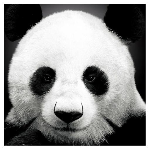 動物壁紙 HD 娛樂 App LOGO-硬是要APP