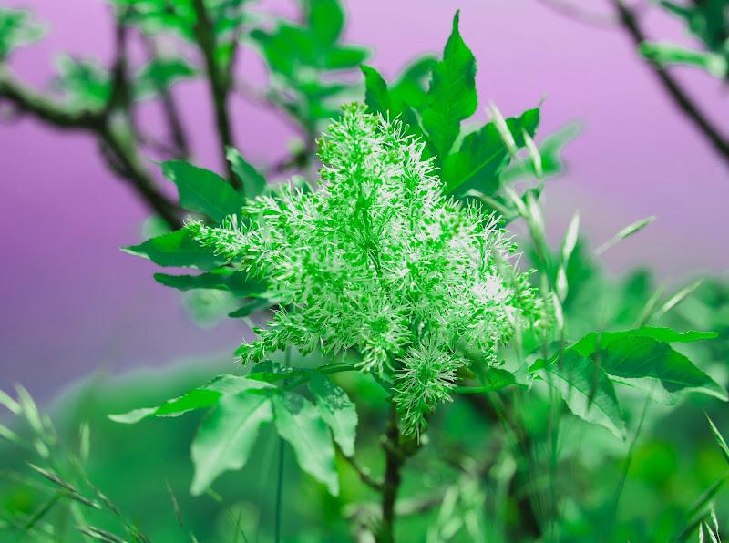 Il colore della primavera di V:V
