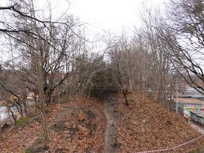 Photo: wycinka drzew, widok w stronę ulicy Wita Stwosza