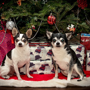 19 the boyz christmas photo (624A4539) December 22, 2017.jpg