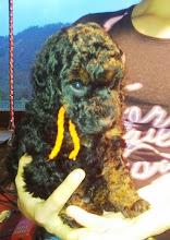 Photo: Fürst Romanov vom Ronthaler Gütl - das Halsband ist eigentlich orange, es sieht nur durch die Lampe gelb aus:)