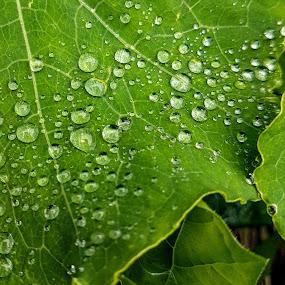 by Zhenya Philip - Nature Up Close Natural Waterdrops ( macro )