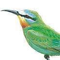 دليل الطيور في الشرق الأوسط icon