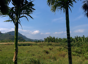 Photo: The interior of the island is heavily cultivated. In the distance is a palm oil plantation (I think).