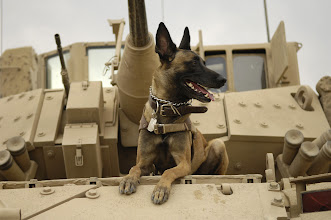 Photo: U.S. Air Force military working dog Jackson sits on a U.S. Army M2A3 Bradley Fighting Vehicle before heading out on a mission in Kahn Bani Sahd, Iraq, Feb. 13, 2007, with his handler, Tech. Sgt. Harvey Holt, of the 732nd Expeditionary Security Forces Squadron. (U.S. Air Force photo by Staff Sgt. Stacy L. Pearsall) (Released)