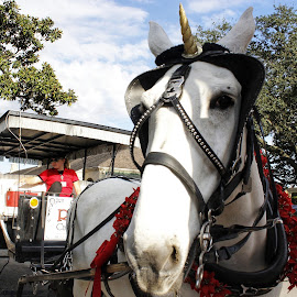 New Orleans Baby by Mary D'Alba - City,  Street & Park  Street Scenes ( horse, horse and carriage, jackson square, new orleans, louisiana, white horse )