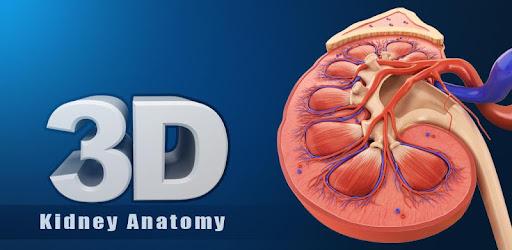 Kidney Anatomy - Apps on Google Play
