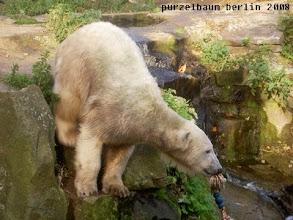 Photo: Runter zum Pool damit ;-)