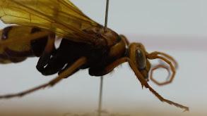 Insect Apocalypse thumbnail