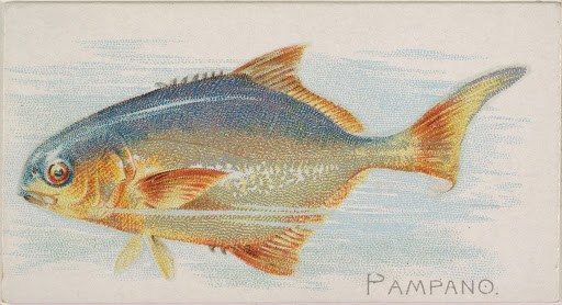Pampano, from the Fish from American Waters series (N8) for Allen & Ginter Cigarettes Brands