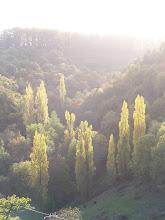 Photo: L'automne à 500 m du gîte de Chapelèche