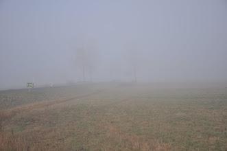 Photo: Mgła na puszcie