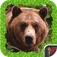 Animal Survival - Bear apk