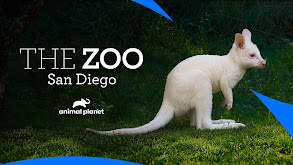 The Zoo: San Diego thumbnail
