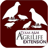 Bobwhite Habitat Evaluation