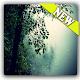 Download 4k rain live wallpaper For PC Windows and Mac