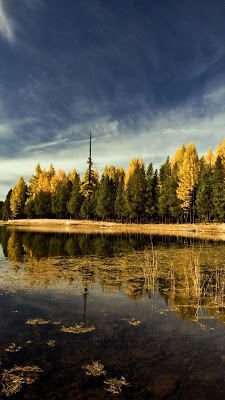 Beautiful Trees Wallpapers - screenshot