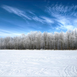 Frosty Forest by Jen St. Louis - Uncategorized All Uncategorized ( forest, frost, snow, winter, icy,  )