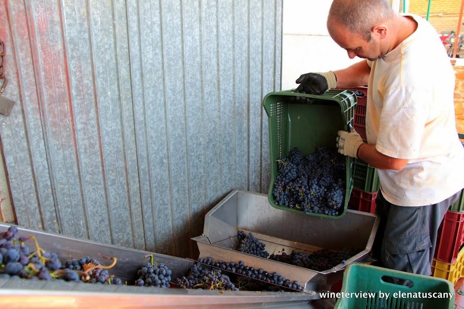 grape harvest, post harvest, vendemmia, uva, vigna, winemaking, cantina, vino, fuuro vino, future wine, vendemmia 2015, grape harvest 2015