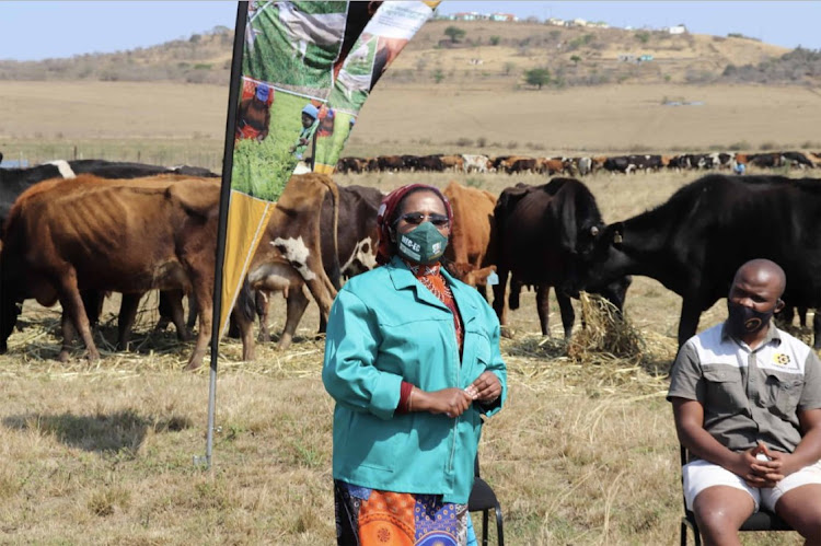 Former rural development and agrarian reform MEC Nomakhosazana Meth during her visit to Mantusini Dairy Trust Farm in rural Port Saint John's where she donated 160 tons of feed and promised to bring an investor to help the farm.
