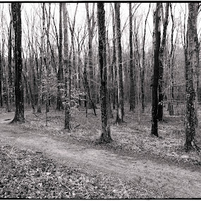 Fall Treescape by Jim Ackermann - Black & White Landscapes ( b&w, fall, path, trees, leaves )