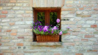 Photo: Überall Blumen :-)