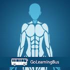 Human Body Anatomy icon