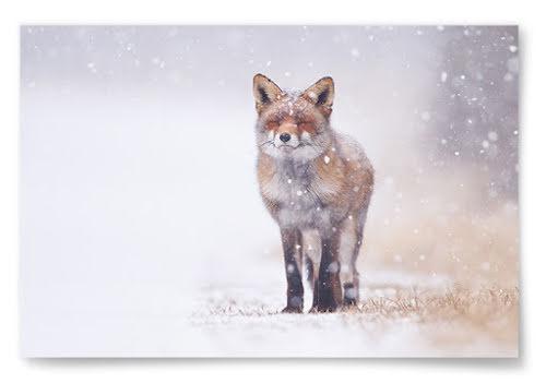 Poster Räv i Fallande Snö