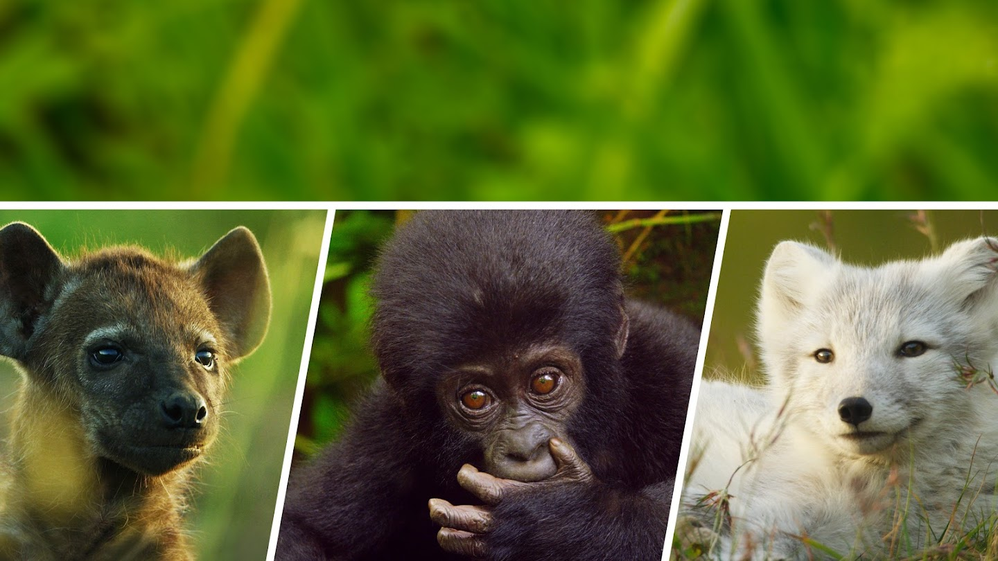 Watch Animal Babies: First Year on Earth live