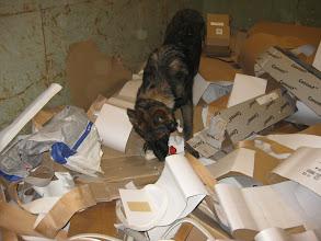 Photo: Bayla 5 mnd har funnet nissen i en kontainer med papp