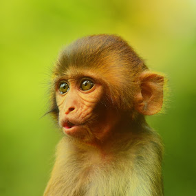 Pout Inventor by Suman Basak - Animals Other Mammals ( nature, green, funny, wildlife, cute, mammal, portrait, animal, eyes )