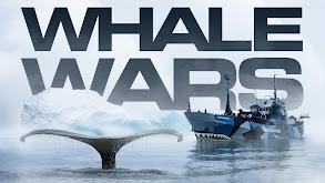 Whale Wars thumbnail