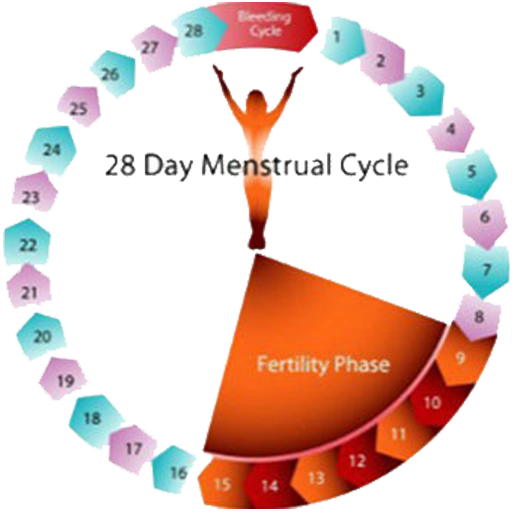 counting menstrual days - 512×512