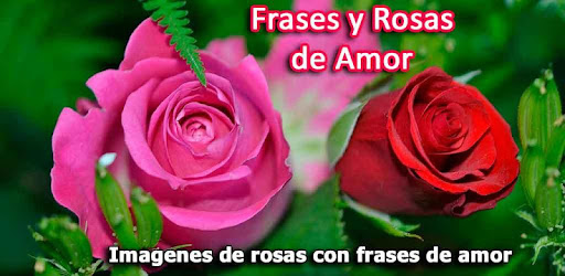 Rosas De Amor Con Frases Fondo Apps On Google Play