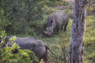 Photo: Rhino