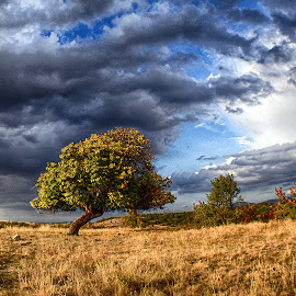Apricot tree by Katerina Mavrovska - Landscapes Prairies, Meadows & Fields