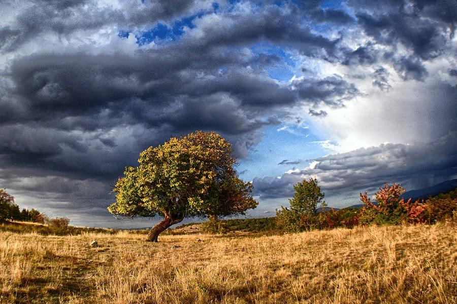 Apricot tree by Katerina Mavrovska - Landscapes Prairies, Meadows & Fields
